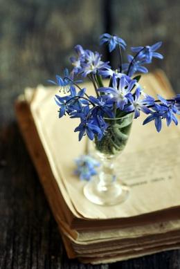 Kevad - Spring_640
