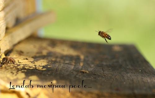 mesipuupoole_640