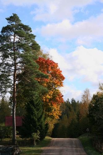 Põlev puu