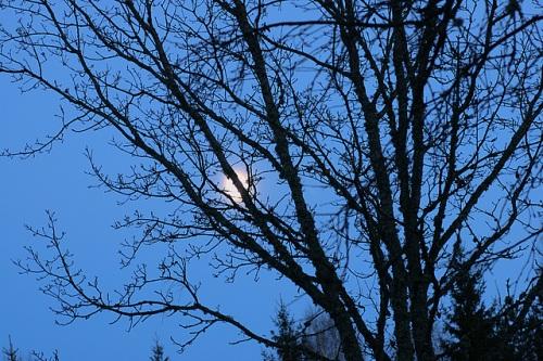 Alasti kuu seisis kõrgel taevas
